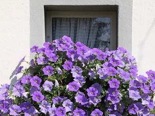Balkonowy ogródek – czy jest to rozwiązanie?