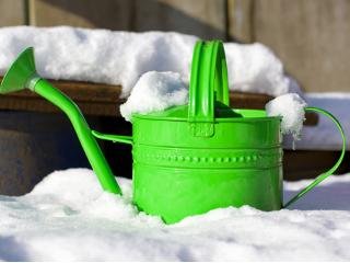 Zabezpieczanie roślin ogrodowych zimą.