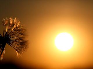Kilka faktów o słońcu.