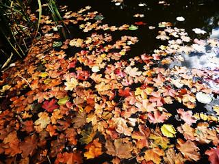 Jak przyjemnie spędzić jesienny wieczór?