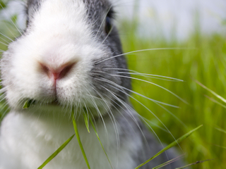 horoskop chiński na rok 2011- królik
