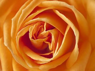 Poznaj markę Love&Desire - jedne z najlepszych feromonów na rynku