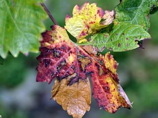 Tryb życia jesienią.